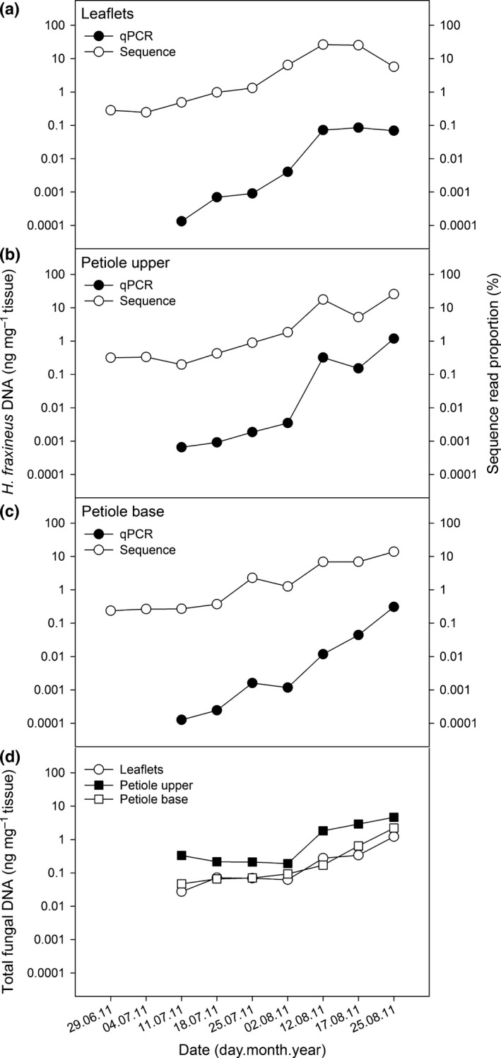 Comparison of Hymenoscyphus fraxineus DNA amount estimates as determined by real‐time PCR ( qPCR ) and sequencing of internal transcribed spacer‐2 ( ITS ‐2) region (sequence) for ash leaflet (a), petiole upper (b) and petiole base (c) samples collected in 2011, and estimates of total fungal DNA amount in the three leaf tissue types (d).