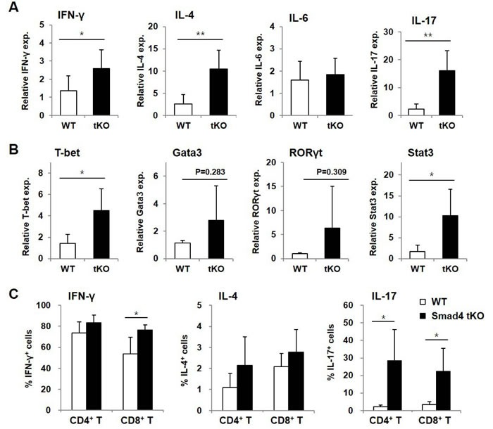 Inflammatory cytokine-expressing T cells are increased in SLCs from Smad4 tKO NOD mice A. - B. Total RNA was isolated from SLCs from Smad4 tKO and WT NOD mice at 12 weeks of age. The expression of mRNA for various ( A ) cytokines and ( B ) transcription factors was analyzed by quantitative real-time PCR. Values are expressed as the relative fold-change as compared with WT ( n = 3-4/group). C. SLCs from Smad4 tKO and WT NOD mice at 12 weeks of age were stimulated with PMA (10 ng/ml) and ionomycin (500 ng/ml) for 12 h. The proportions of T cells producing IFN-γ, IL-4 and IL-17 were measured by FACS analysis ( n = 5/group). Data are mean ± SD. * P