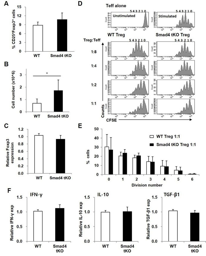 The proportion and suppressive function of Treg cells are maintained in Smad4 tKO NOD mice SLCs were isolated from Smad4 tKO and WT NOD mice at 12 weeks of age. ( A ) The proportion and ( B ) absolute number of Treg (CD4 + CD25 + Foxp3 + T) cells were determined by flow cytometry. C. The expression of Foxp3 mRNA was analyzed by qRT-PCR. D. Representative histogram plots of suppression assay of Treg cells. CFSE-labelled effector T cells (CD4 + CD25 − T; Teff) from WT NOD mice were stimulated with anti-CD3/CD28-coated beads for 72 h in the presence of Treg (CD4 + CD25 + T) cells from WT or Smad4 tKO NOD mice at various ratios (left margin). Proliferation of Teff cells was assessed by flow cytometry. E. The percentage of cells undergoing the indicated number of divisions when the Treg:Teff cell ratio was 1:1. Values are means ± SD ( n = 3-4/group). ( F ) Total RNA was isolated from Treg cells and the expression of mRNA for <t>IFN-γ,</t> IL-10 and TGF-β was analyzed by qRT-PCR. Values are means ± SD ( n = 8-9/group), * P