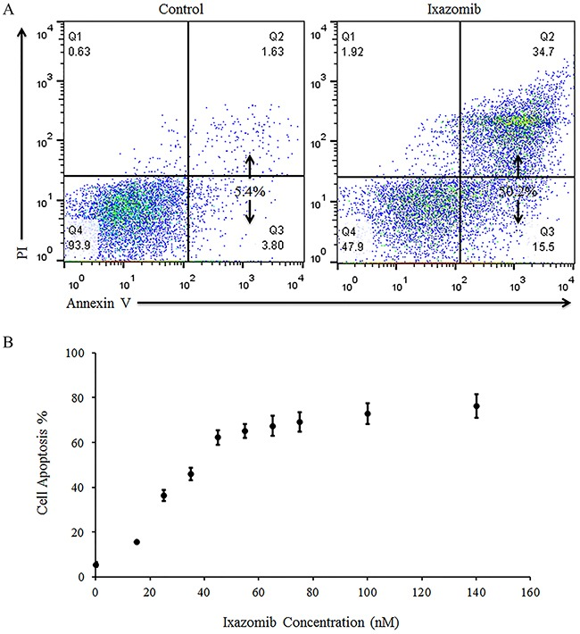 Treatment of BRAF wild-type human melanoma cell lines with ixazomib leads to apoptotic cell death with half maximal effective concentration (EC 50 ) of 26.9 nM WM1366 (BRAF wild-type) human melanoma tumor cells were plated on a 6 well plate at a density of 2 × 10 5 cells/well. A. WM1366 cells were treated for 48 hours with complete medium supplemented with either 10% dimethyl sulfoxide (control) or with 35 nM ixazomib. Cells were then subjected to annexin V/propidium iodide (PI) staining and flow cytometric analysis to determine the levels of apoptosis. B. WM1366 cells were treated for 48 hours with complete medium supplemented with either 10% dimethyl sulfoxide (control, 0 nM ixazomib dose) or with varying doses of ixazomib. After incubation, the cells were subjected to annexin V/PI staining and flow cytometric analysis to determine the levels of apoptosis. Data represented as mean ± standard error of the mean.