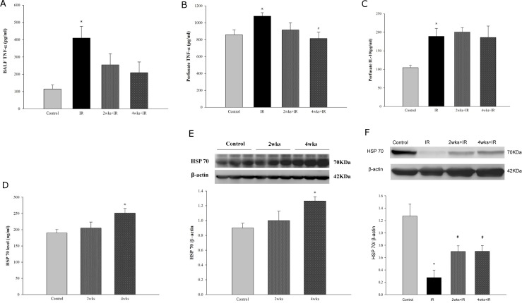 Effects of HSP70 on the protective effects of CKD against IR lung injury. (A) TNF-α level in the BAL; (B) TNF-α level in the perfusate; (C) IL-10 level in the perfusate; (D) HSP70 level in the lung tissue; (E) cytoplasmic HSP70 level in the lung tissue determined by western blotting; and (F) HSP70 level in the lung tissue determined by western blotting in IR induced lung injury. The data are expressed as the means ± SD. *Significantly different from the control ( P