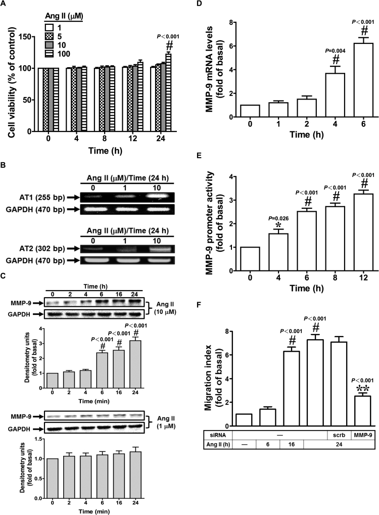 Ang II induces MMP-9-dependent cell migration. (A) Cells were incubated with Ang II for the indicated times, and then the cell viability was determined. (B) HASMCs were treated with Ang II for 24 h, and then the mRNA levels of AT1R and AT2R were determined by RT-PCR. (C) Cells were incubated with Ang II for the indicated times, and then the protein expression of MMP-9 was determined by Western blot. (D, E) Cells were incubated with Ang II (10 μM) for the indicated times, and then the mRNA levels and promoter activity of MMP-9 were determined by real-time PCR and promoter assay, respectively. (F) Cells were incubated with Ang II (10 μM) for the indicated times or transfected with siRNA of scrambled or MMP-9, and then treated with Ang II (10 μM) for 24 h. The cell migration was determined by migration assay. Data are expressed as mean±S.E.M. of three independent experiments. *P