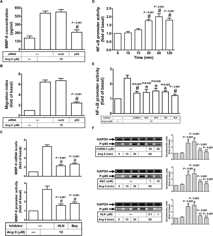 CORM-2 reduces Ang II-induced NF-κB activation in HASMCs. Cells were transfected with siRNA of scrambled or p65, and then treated with Ang II for 24 h. The concentration of MMP-9 was determined (A). The cell migration was determined by migration assay (B). (C) Cells were pretreated with helenalin (HLN) or Bay11-7082 (Bay) for 1 h, and then treated with Ang II for 6 h. The mRNA levels and promoter activity of MMP-9 were determined by real-time PCR and promoter assay, respectively. (D) Cells were treated with 10 μM Ang II for the indicated times, and then the promoter activity of NF-κB was measured by promoter assay. (E) Cells were pretreated with CORM-2, NAC, APO, DPI, and HLN, and then treated with Ang II for 60 min. The promoter activity of NF-κB was measured by promoter assay. (F) Cells were pretreated with CORM-2, NAC, or HLN, and then treated with Ang II for the indicated times. The protein expression of phospho-p65 was determined. Data are expressed as mean±S.E.M. of three independent experiments. # P