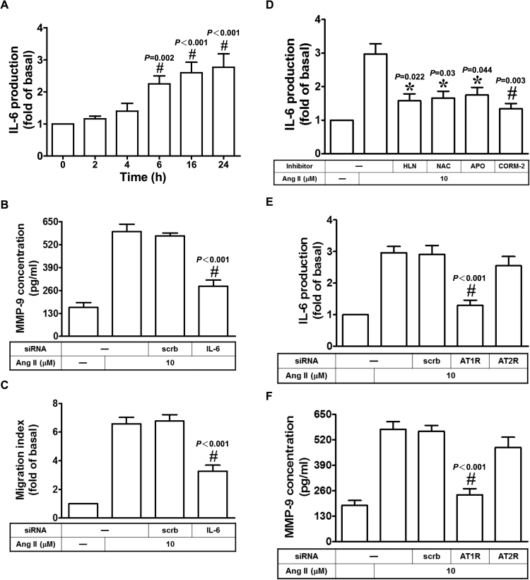 CORM-2 reduces Ang II-induced MMP-9 expression via inhibition of the AT1R/IL-6 pathway in HASMCs. (A) Cells were treated with 10 μM Ang II for the indicated times, and then the production of IL-6 was measured. Cells were transfected with siRNA of scrambled or IL-6, and then treated with Ang II for 24 h. The concentration of MMP-9 was determined (B). The cell migration was determined by migration assay (C). (D) Cells were pretreated with HLN, NAC, APO, or CORM-2, and then treated with Ang II for 24 h. The production of IL-6 was measured. (E, F) Cells were transfected with siRNA of scrambled, AT1R, or AT2R, and then treated with Ang II for 24 h. The production of IL-6 and MMP-9 was measured. Data are expressed as mean±S.E.M. of three independent experiments. # P