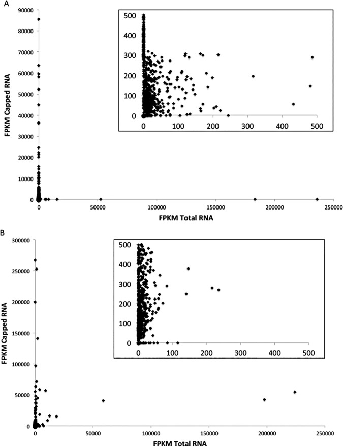 A. Transcript coverage (FPKM) of Wolbachia genes reveals over 88% of Wolbachia transcripts from B . malayi adult male RNA were enriched using the Cappable-seq technique. A closer view of transcript abundance (inset) reveals most Wolbachia transcripts in total RNA are present in very low abundance, whereas the Wolbachia transcripts are more abundant in the capped RNA sample. Points along the y-axis are indicative of Wolbachia transcripts that were undetectable in total RNA that were detected in the capped RNA sample. B. Transcript coverage (FPKM) of Wolbachia genes reveals over 95% of Wolbachia transcripts from B . malayi MF RNA were enriched using the Cappable-seq technique. A closer view of transcript abundance (inset) reveals most Wolbachia transcripts in total RNA are present in very low abundance, whereas the Wolbachia transcripts are more abundant in the capped RNA sample. Points along the y-axis are indicative of Wolbachia transcripts that were undetectable in total RNA that were detected in the capped RNA sample.
