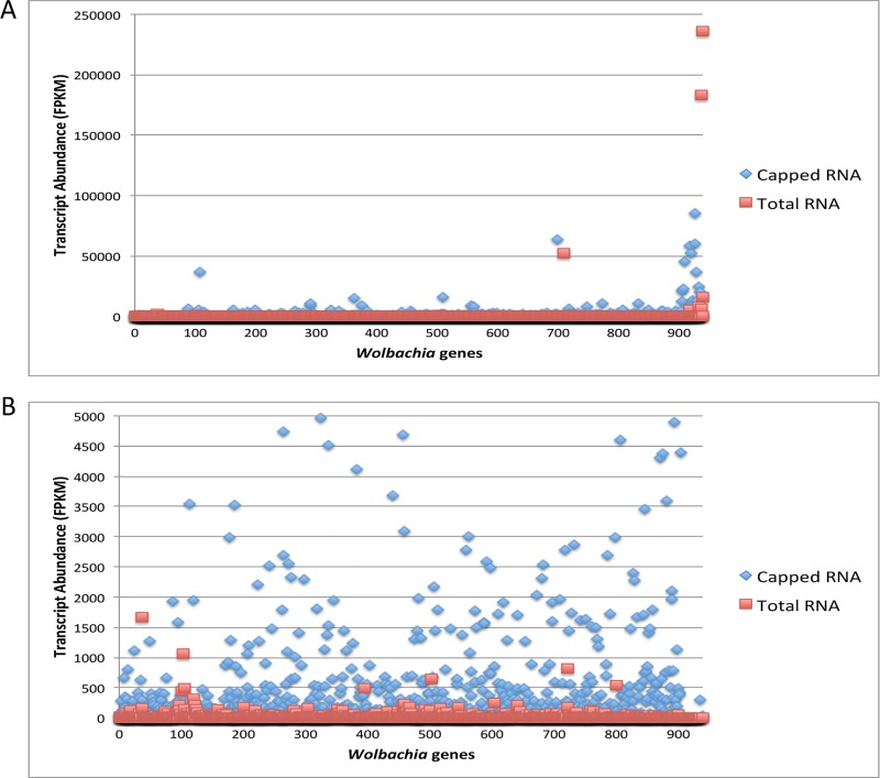 (A) Transcript abundance of all 940 annotated Wolbachia genes (listed by geneID number) reveals over 95% of Wolbachia transcripts from B . malayi adult male RNA were enriched using the Cappable-seq technique. Each transcript is indicated by in red (the FPKM value in the total RNA) and blue (the FPKM value in capped-RNA sample)(B) A closer view (note difference in y-axis scales between panel A and B) of transcript abundance reveals an enrichment in Wolbachia transcripts in the capped RNA sample.