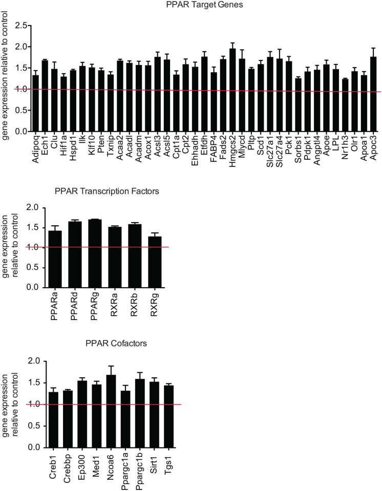 Arrdc3 deletion increases PPAR target gene expression in adipocytes. Quantitative PCR array analysis of gene expression of PPAR target genes, PPAR cofactors and PPARs and associated transcription factors in control versus Arrdc3 SVF-derived adipocytes in vitro (n = 3 mice per group). Only significantly different genes are displayed. *p≤ 0.05.