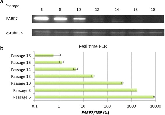 Expression of FABP7 during subculture of TUHR14TKB cells. The zero passage (0) was started when the cells were received from RIKEN. TUHR14TKB cells were cultured in RPMI 1640 medium containing 10% FBS for one to two weeks, harvested when they reached confluence, and assayed for FABP7 expression. a Western blot analysis of FABP7 expression. b Real-time PCR analysis of FABP7 expression