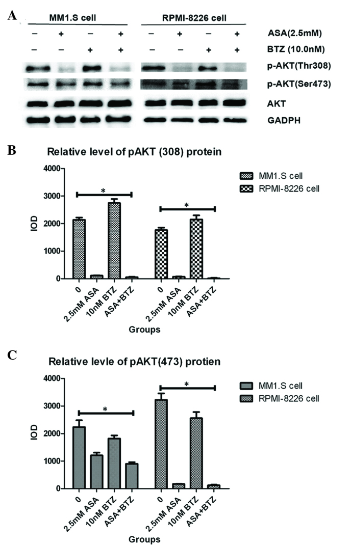 Effect of ASA and/or BTZ treatment on expression of p-AKT in myeloma cells. (A) MM1.S and RPMI-8226 cells were treated with ASA, BTZ and ASA+BTZ for 48 h, respectively, following which the whole cell lysates were prepared using <t>Phosphosafe™</t> extraction reagent. The levels of p-AKT (Thr 308 and Ser 473) and AKT were analyzed using western blot analysis with corresponding antibodies. Each blot is representative of three independent experiments. (B) Integrated optical density data of p-AKT(308) are presented as the mean ± standard deviation. (C) Integrated optical density data of p-AKT(473) are presented as the mean ± standard deviation. *P