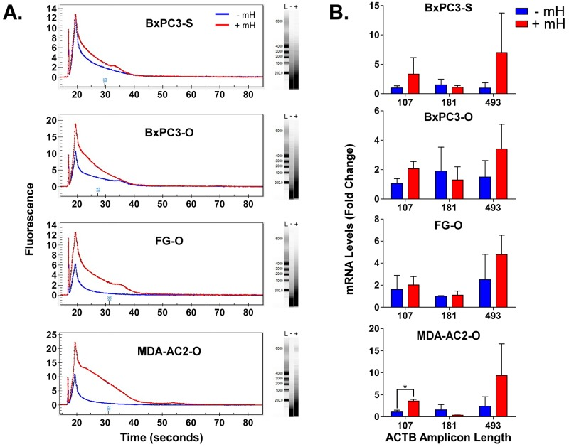 A . Overlay of representative Experion-generated electropherograms and gels for total extracted FFPE RNA from either the -mH or +mH RNA extraction methods. L, - and + in the gels indicates lanes for the ladder, -mH and +mH sample preparation methods. B . RNA extracted from FFPE tumor samples using these two methods was reverse transcribed to cDNA and analyzed by qPCR in triplicate using βactin-specific primers that generate increasing length amplicons. βactin Ct values were normalized relative to the HPRT1 and POLR2A house-keeping genes and plotted as relative quantification (RQ) fold change compared to the FFPE samples processed without the mH-based method. * indicates a Student's t-test p value