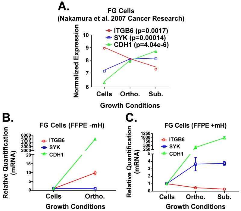 A . Previously published expression patterns for ITGB6, SYK and CDH1 genes (Nakamura et al.) in FG cells grown under 2D in vitro , subcutaneous in vivo and orthotopic in vivo microenvironment conditions. RNA was processed from fresh/frozen samples. B and C . qPCR analysis for these same three genes in RNA extracts from FG cells grown in vitro or FFPE samples of FG cell xenografts. RNA was isolated using the standard Qiagen FFPE RNA kit protocol (B) or our mH-modified protocol (C). Relative quantification (RQ) values for gene expression were normalized to house-keeping genes (GAPDH and/or POLR2A) and calculated relative to gene expression levels in cells grown in vitro .