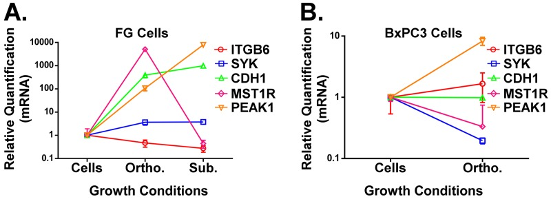 A and B . qPCR analysis of ITGB6, SYK, CDH1, PEAK1 and MST1R in FG (A, KRas mutant G12D line) or BxPC3 (B, KRas wild type line) PDAC cells grown under the indicated microenvironmental conditions. All RNA was extracted using our mH-modified Qiagen FFPE kit protocol and relative quantification (RQ) values for gene expression were normalized to house-keeping genes (GAPDH and/or POLR2A).