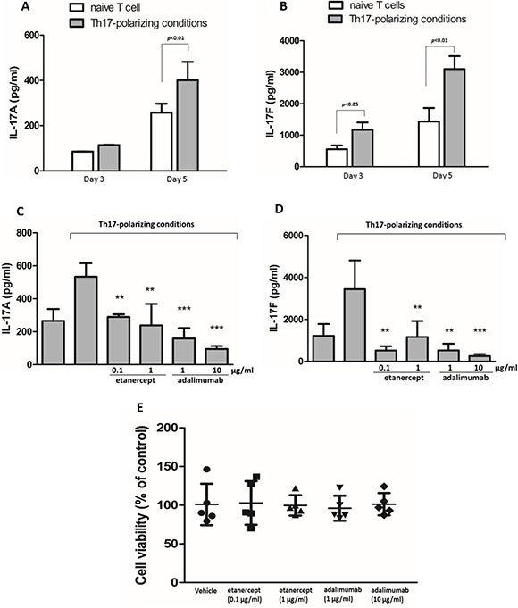 Etanercept and adalimumab suppress IL-17A and IL-17F production in human Th17-polarized T cells Human naïve CD4 + T cells polarized towards the Th17 phenotype in the presence of rhIL-2, rhIL-1β, rhIL-23, rhTGF- β and rhIL-6 with anti-hCD3, anti-hCD28, anti-hIL-4, and anti-hINF-γ, and then were cultured for 3 days or 5 days. Control naïve T cells were cultured only in the presence of anti-hCD3, anti-hCD28 and rhIL-2. The supernatants were collected for ( A ) IL-17A and ( B ) IL-17F detection by ELISA. The results represent the means ± standard deviations of three independent experiments. Pretreatment with etanercept (0.1 and 1 μg/ml) or adalimumab (1 and 10 μg/ml) suppressed ( C ) IL-17A and ( D ) IL-17F production in human CD4 + T cells from a healthy individual after 5 days of Th17-polarized conditions. The results represent the means ± standard deviations of three experiments. * P