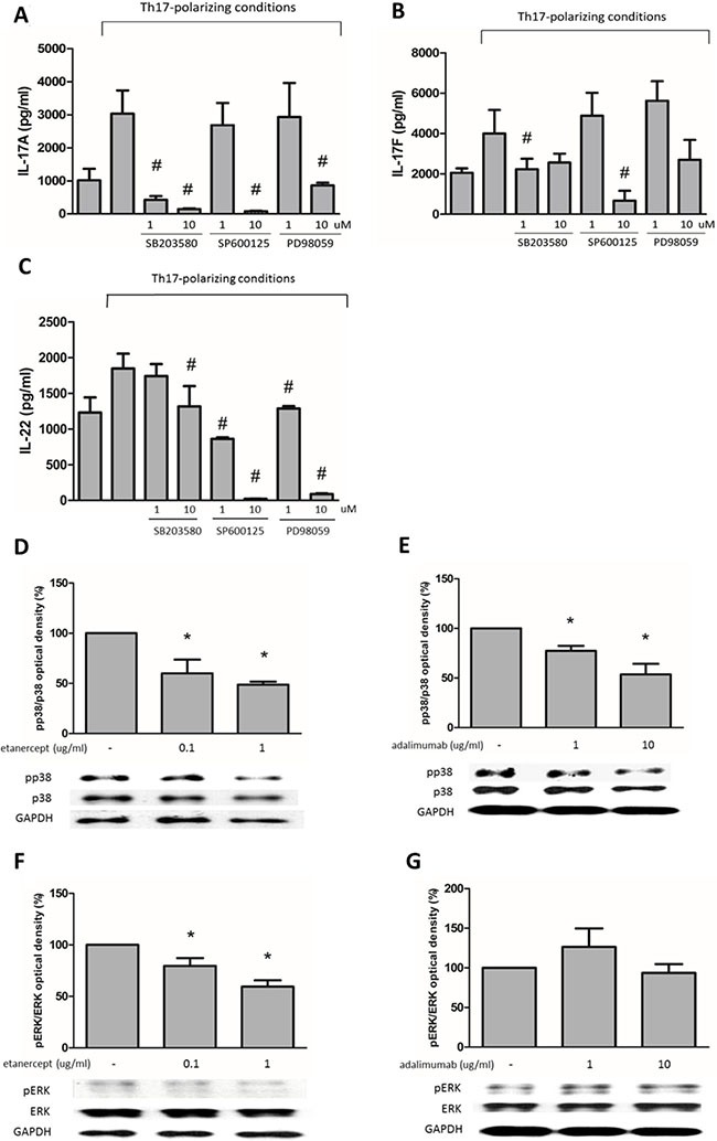 The suppressive effects of etanercept and adalimumab on IL-17A, IL-17F and IL-22 expression in human Th17-polarized cells through MAPK pathways ( A ) Human Th17-polarized cells were induced from purified CD4 + T cells from healthy subjects. Pretreatment with SB203580 (a p38 inhibitor, 10 −6 –10 −5 M), SP600125 (a JNK inhibitor, 10 -5 M) or PD98059 (an ERK inhibitor, 10 −5 M) significantly suppressed IL-17A expression in Th17-polarized cells. ( B ) SB203580 (10 -6 M) and SP600125 (10 −5 M) significantly suppressed IL-17F expression in human Th17-polarized cells. ( C ) Pretreatment with SB203580 (10 −5 M), SP600125 (10 −6 –10 −5 M) and PD98059 (10 −6 –10 −5 M) could significantly suppress IL-22 expression in Th17-polarized cells. # P