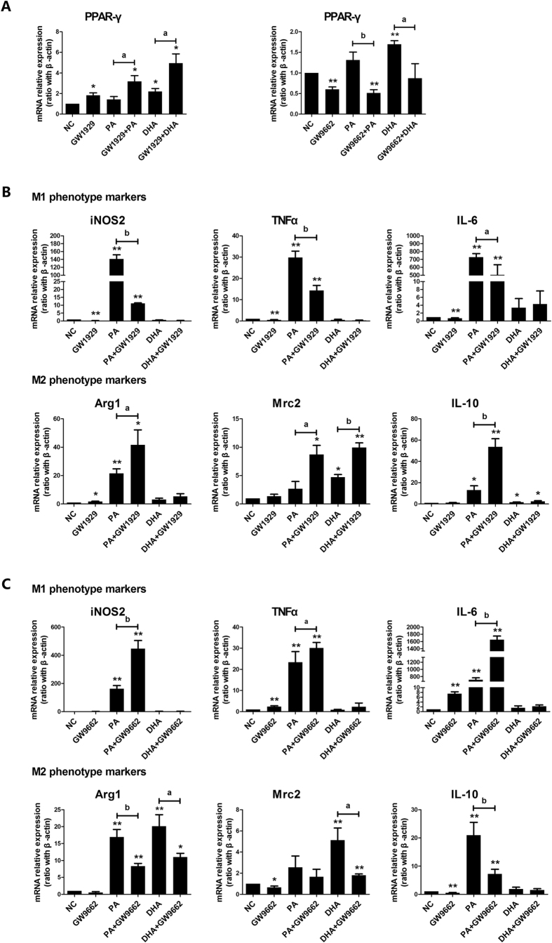 Modulation of PPAR-γ activity on lipid-induced macrophages M1/M2 polarization shifting. RAW264.7 macrophages were pre-incubated with either GW1929 (20 μmol/L) or GW9662 (60 μmol/L) for 3 h, followed by combined treatment with either PA (0.5 mmol/L) or DHA (50 μmol/L) for 6 h. Total RNA was extracted from treated RAW264.7 macrophages. ( A ) PPAR-γ agonist and antagonist affected PPAR-γ mRNA expression. ( B ) PPAR-γ agonist GW1929 flavored macrophages towards M2 phenotype shifting in PA-treated group. ( C ) PPAR-γ antagonist GW9662 enhanced M1 phenotype in PA-treated cells. All values are expressed as mean ± SEM, * P