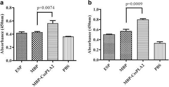 Collagen I produced by HSCs are increased after incubated with MBP- Cs sPLA2. The effect of MBP- Cs sPLA2 on activation of hepatic stellate cells and production of collagen I was evaluated by ELISA. After 36 h or 48 h, the supernatant of cells was detected by ELISA. Collagen I rabbit antibody (1:2000 dilutions) was used as the first antibody and HRP-conjugated goat anti-rabbit IgG was used as a secondary antibody (1:10,000 dilution). a Supernatant of cell culture after incubation for 36 h; b supernatant of cell culture after incubation for 48 h. Unpaired t -test was applied for statistical analysis