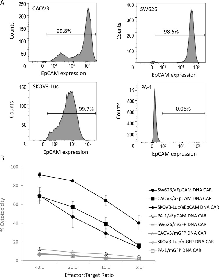In vitro cell lysis of EpCAM-positive tumour cells with T cells genetically modified by a lentiviral anti-EpCAM CAR vector ( A ) EpCAM expression on ovarian cancer cells as demonstrated by flow cytometric analysis. Three EpCAM-positive human epithelial ovarian cancer cell lines (CAOV3, SW626, and SKOV3-luc) and one EpCAM-negative human ovarian cancer cell line (PA-1) were analysed. ( B ) % cytotoxicity. Delfia EuTDA cytotoxicity assay (3 hours EuTDA culturing) was used to assess the cytotoxicity of anti-EpCAM CAR-expressing T cells against EpCAM-positive ovarian cancer cell lines. Specific cell lysis was demonstrated by including EpCAM-negative PA-1 cells and the use of mGFP CAR. Mean ± SD of three validation runs is represented.