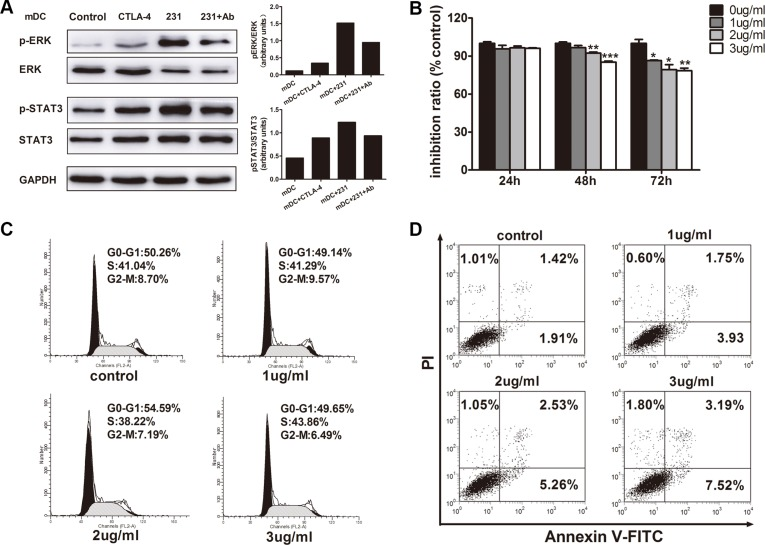 The relevance of ERK and STAT3 activation by CTLA-4 in CTLA-4 + BCCs-treated DC and the direct inhibitory effects of CTLA-4 mAb on CTLA-4 + BCCs ( A ) ImDCs were cultured in medium (control), or with soluble CTLA-4 (CTLA-4), or coculture with CTLA-4 + BCCs alone (231) or in the presence of CTLA-4 mAb (Ab) for 1 hour. Then, treated cells were collected. Whole cell extracts were prepared and the protein levels of phosphorylated (p) and total ERK1/2 and STAT3 were determined by western blot. Right insets: the quantitative analysis of p-ERK/ERK, p-STAT3/STAT3 protein ratio, as measured by ImageJ analysis of band intensity. Values are expressed in arbitrary units. ( B ) CCK-8 assays showed the effects of CTLA-4 mAb on cell viability. ( C ) Flow cytometry assays showed the effects of CTLA-4 mAb on cell cycle progression. ( D )Annexin staining assays showed the effects of CTLA-4 mAb on cell apoptosis. Representative result from three independent experiments was shown. * P