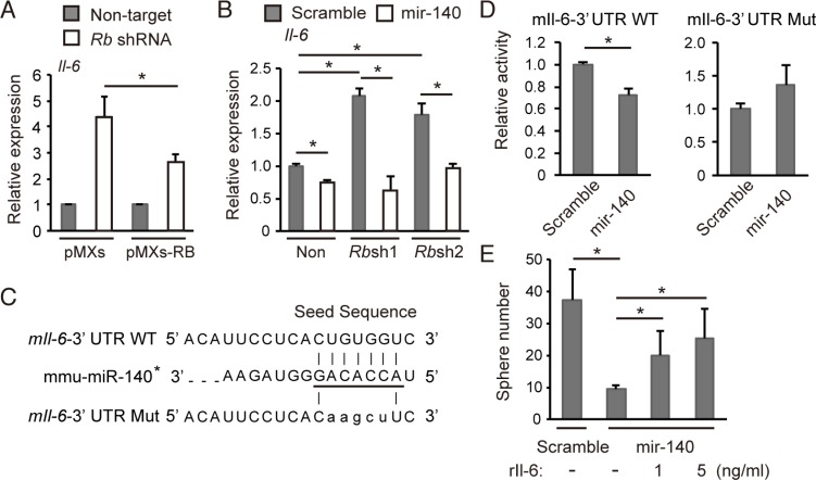 mmu-mir-140 mediates Rb function to control Il-6 expression ( A ) RT-qPCR of Il-6 in p 53-null soft tissue sarcoma cells transduced with the indicated shRNA and retroviral vectors. N = 3. ( B ) RT-qPCR of Il-6 in p 53-null soft tissue sarcoma cells transduced with the indicated vectors. N = 3. ( C ) The sequence of the mouse Il-6 3′UTR containing seed sequence of mmu-mir-140 (underlined). The seed sequence of the mouse Il-6 3′UTR was mutated as shown (mIl-6-3′ UTR Mut ). ( D ) m Il-6-3Times New RomanUTR WT or m Il-6-3′UTR Mut was transduced into NIH3T3 cells together with the mmu-mir-140 expression vector or control (scramble). After 48 hours, luciferase activity was measured. ( E ) Number of spheres derived from 5 × 10 4 of p 53-null soft tissue sarcoma cells transduced with the indicated vector in the presence of indicated concentration of recombinant mouse Il-6 (#406-ML-005, R D Systems). N = 3.