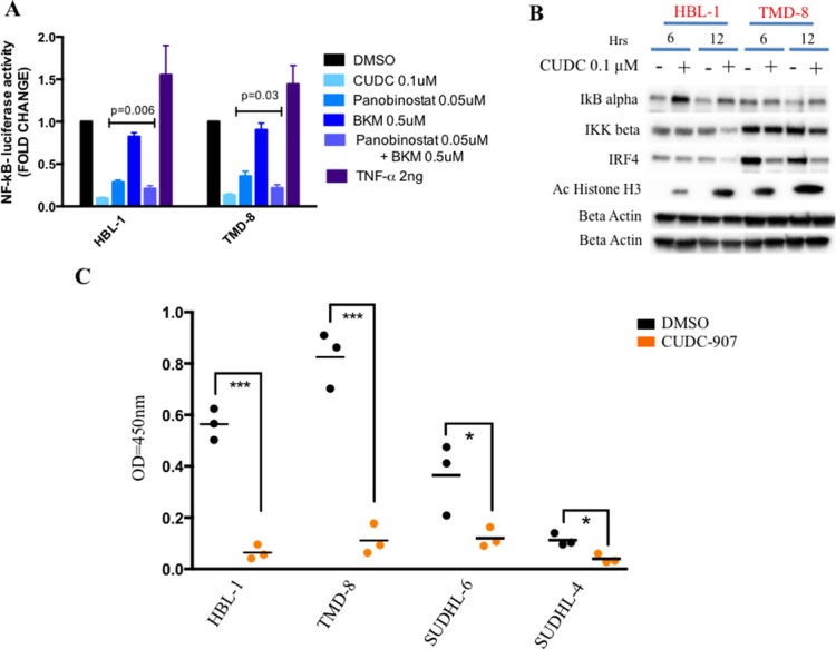 CUDC-907 inhibits NF-kB signaling in ABC DLBCLs ( A ) Relative NF-kB-luciferase activity in two representative ABC DLBCL cell lines (HBL-1 and TMD-8). Cells were treated for 12 hours with indicated concentration of either panobinostat, BKM-120, the combination of these two drugs, CUDC-907 or DMSO. Cells were incubated with 2 ng of TNF-α as positive control for NF-kB activation. Error bars represent standard error of the mean (S.E.M) of triplicate experiments. ( B ) Western blot demonstrating that CUDC-907 (0.1 μM for 6 and 12 hours) inhibits NF-kB activation by increasing IkB alpha levels and decreasing IKK <t>beta</t> levels in two representative ABC DLBCL cell lines (HBL-1 and TMD-8). The changes were associated with a decrease in IRF4 levels (see Supplementary Figure 2B ). ( C ) ELISA assay showing a more pronounced decrease of nuclear NF-kB p65 in two representative ABC (HBL-1 and TMD-8) cell lines compared with two GCB (SUDHL-6 and SUDHL-4) treated with either 0.1 μM CUDC-907 or DMSO for 12 hours. Differences between groups were calculated with the Student's t test. * p