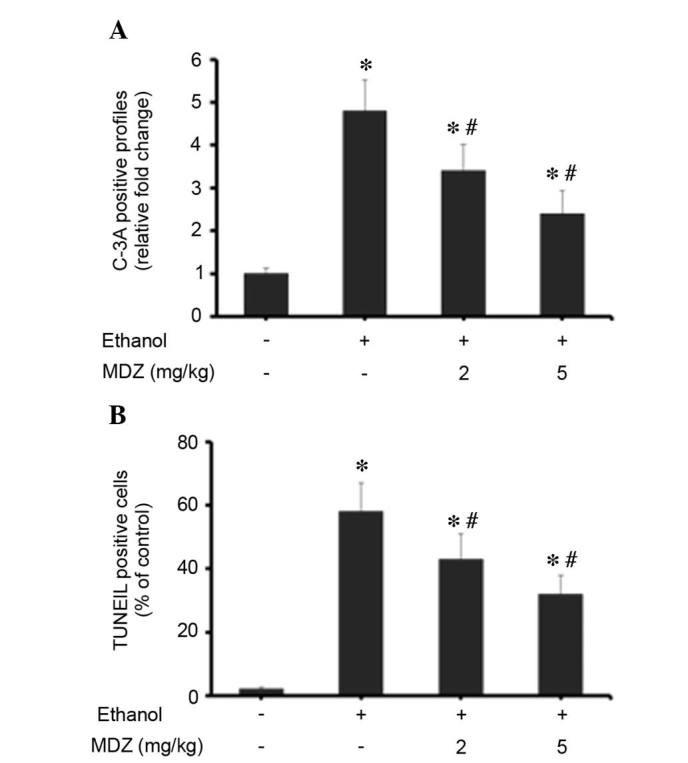 Effects of midazolam on ethanol-induced neuroapoptosis in mice. (A) Immunohistochemical analysis of brain sections (n=5/group) was performed using anti-C-3A and was visualized using <t>3,3′-diaminobenzidine</t> chromogen. The C-3A positive staining was documented under a light microscope and scoring of C-3A-positive cells per mm 2 brain sections was performed. The total number of C-3A-positive cells was presented as the percentage of positive cells compared to the control group. (B) TUNEL staining of brain sections (n=5/group) was performed and analyzed. Data are presented as the mean ± standard deviation. *P