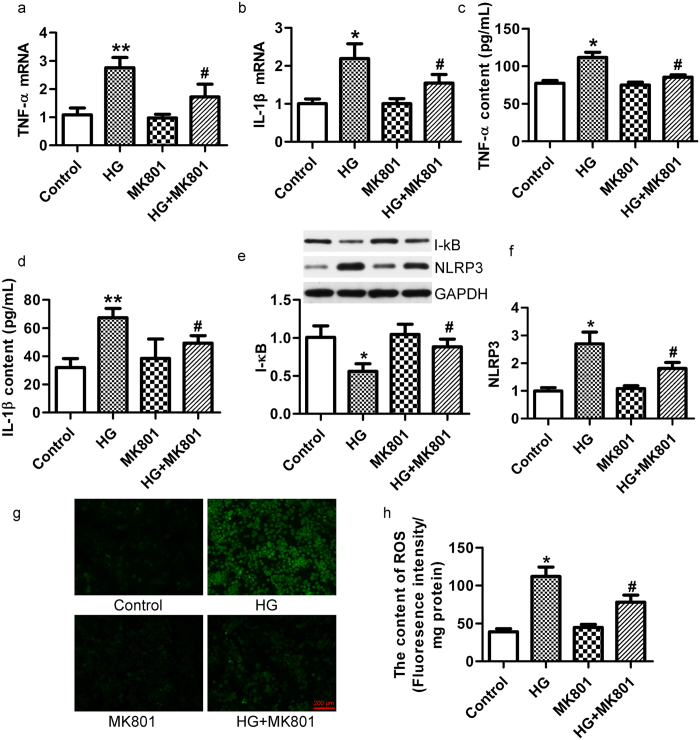 MK801 inhibited the expression of inflammatory cytokine and oxidative stress in high-glucose-treated β-cells. MK801 decreased the mRNA expression of TNF-α ( a ) and IL-1β ( b ) in MIN6 cells treated with glucose (33.3 mM) for 72 h, detected by real-time PCR. MK801 decreased the content of TNF-α ( c ) and IL-1β ( d ) protein content in the supernatant of MIN6 cells treated with glucose (33.3 mM) for 72 h, detected by ELISA. (n = 6, * p