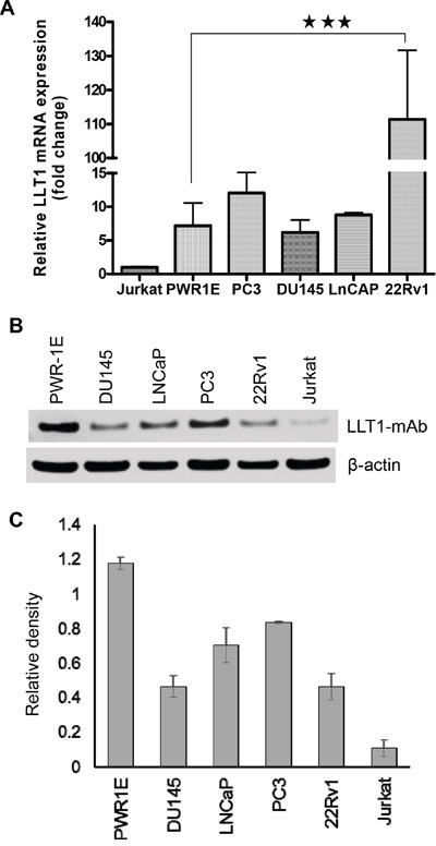 Human prostate cancer cells express LLT1 A. mRNA expression of LLT1 on prostate cancer cell lines PC3, DU145, LNCaP, 22Rv1, normal prostate cell PWR-1E and Jurkat (T cell line) was determined by qRT-PCR. LLT1 expression was determined by using LLT1 sequence specific primers and Taqman gene expression assays in an Eppendorf Realplex2 Mastercycler. Reactions were done in 20 μl triplicates using the ΔΔCT method, with Glyceraldehyde-3-phosphate dehydrogenase (GAPDH) as the reference gene. Each bar represents a mean ± s.e. of three independent experiments. B. LLT1 protein expression was analyzed by Western blotting in a panel of prostate cancer cell lines including leukemic Jurkat cells. GAPDH was used as a loading control. C. A bar graph showing densitometric analysis of LLT1 protein expression normalized to GAPDH. Each bar represents the mean ± s.e. of three independent experiments.