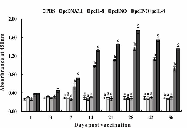 Specific serum antibody detection in vaccinated fish by ELISA Sera were collected at different days p.v. from the fish vaccinated with PBS (control), pcDNA3.1, pcIL-8, pcENO and pcENO+pcIL-8. Data are presented as means ± SD ( n = 5). Different letters mean that the data of different groups in the same time differ significantly ( p