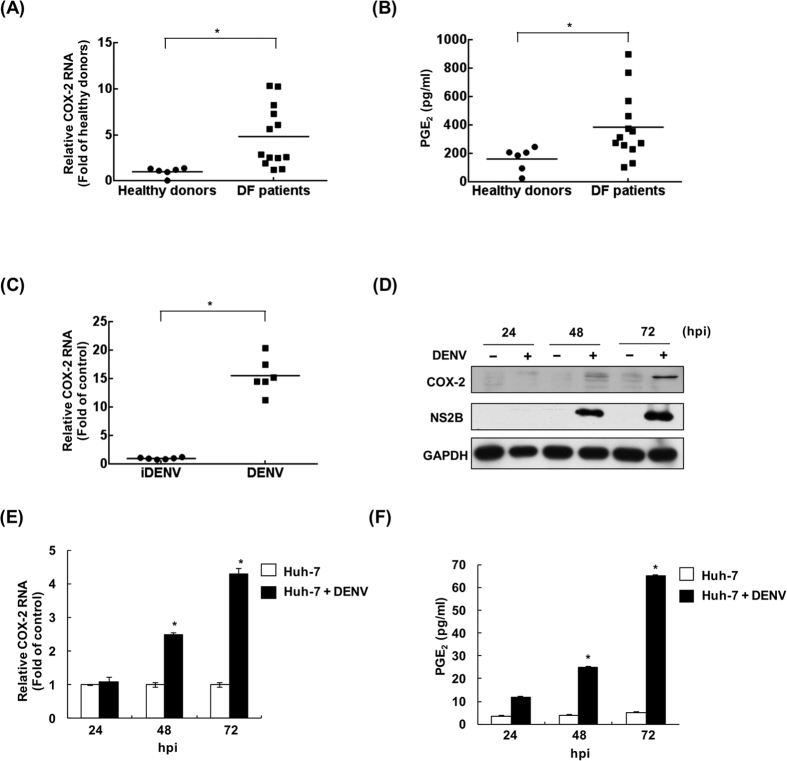 DENV induces COX-2 expression and PGE 2 production in DF patients, DENV-infected mice, and human hepatoma cells. ( A and B ) Elevated COX-2 expression and PGE 2 levels in the blood of dengue fever patients. COX-2 mRNA and PGE 2 levels in blood samples from 13 clinical DF patients and 6 healthy donors were determined by RT-qPCR or ELISA, respectively. ( C ) The induced COX-2 expression in DENV-2-infected ICR suckling mice. Six-day-old suckling mice were injected with 2.5 × 10 5 pfu of DENV-2 or heat-inactivated DENV-2 (iDENV) by intracerebral injection. Each group comprised six suckling mice (n = 6). Six days after inoculation, COX-2 mRNA levels of mouse brain tissues were determined by RT-qPCR. DENV-2 time-dependently induced ( D ) COX-2 protein expression, ( E ) COX-2 RNA replication, and ( F ) PGE 2 production. Huh-7 cells were infected with DENV-2 at an MOI of 0.1, and the cell lysate and cellular RNA were extracted at the indicated time points (24, 48, and 72 hpi). Western blotting was performed with anti-COX-2, anti-NS2B, and anti-GAPDH antibodies. Relative RNA levels of DENV-2 and COX-2 were determined by RT-qPCR following the normalization of cellular gapdh mRNA levels. Supernatants were collected at the indicated time points and subjected to a PGE 2 ELISA assay. All data from cell-based experiments are indicative of at least three independent experiments, with each measurement carried out in triplicate. Error bars are expressed as the mean ± SD of three independent experiments; * P