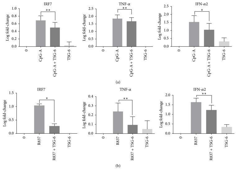 TSG-6 reduced the transcription of interferon regulatory factor 7 and its associated genes in GEN2.2. TSG-6 reduced the transcription of interferon regulatory factor 7 and its associated genes in GEN2.2. Real-time PCR analysis of IRF7, IFN- α 2, TNF- α , and IL-1 β in GEN2.2 cells treated with TSG-6 (1000 ng/mL) overnight, followed by stimulation with CpG-A at 2 μ M (a) or R837 at 10 ng/mL (b) for 3 hours. Graphs show data of more than 3 experiments performed in duplicate. Error bars indicate SEM. One-Way ANOVA, ∗ p