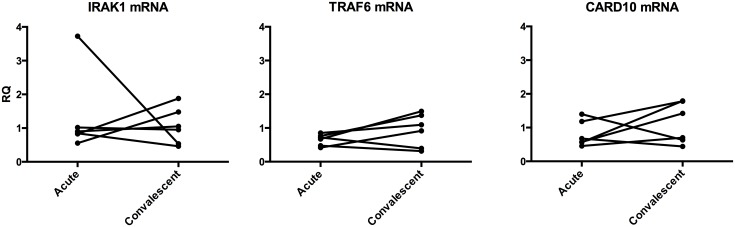 Expression levels of target genes for miR-146a show only marginal differences between the acute and the convalescent stage of disease in patients with V . cholerae O1 infection. Expression levels of IRAK1, TRAF6 and CARD10 mRNAs were determined in duodenal biopsies collected at acute stage (Acute) and at the convalescent stage (Convalescent) of disease caused by V . cholerae O1 infection. Expression levels were determined by a real-time qRT-PCR and normalized to the content of 18S rRNA in the sample. Results are shown as relative quantity (RQ) calculated by using the 2 (-ΔΔct) -method and the median Δct-value at convalescent stage as reference. Each point represents the value of an individual patient at the indicated disease stage. Lines connect the values at acute and convalescent stage of the same patient.