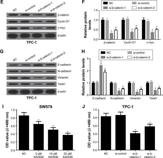 Inactivation of the Wnt/β-catenin pathway suppressed cell proliferation and EMT in thyroid cancer cells. Notes: SW579 cells were treated with different concentrations of Wnt/β-catenin signaling inhibitor XAV939 (5, 10 and 20 μM), and TPC-1 cells were transfected with si-β-catenin-1 or si-β-catenin-2. ( A and B ) Western blot analysis of β-catenin, cyclin D1 and c-myc in SW579 cells at 48 h. ( C and D ) Western blot analysis of E-cadherin, N-cadherin, Vimentin and Twist in SW579 cells at 48 h. ( E and F ) Western blot analysis was performed to test the expression of β-catenin, cyclin D1 and c-myc in TPC-1 cells at 48 h. ( G and H ) Western blot analysis was applied to determine the level of E-cadherin, N-cadherin, Vimentin and Twist in TPC-1 cells at 48 h. ( I ) MTT assay was applied to examine the viability of SW579 cells at 48 h. ( J ) MTT assay was carried out to measure the viability of TPC-1 cells at 48 h. * P