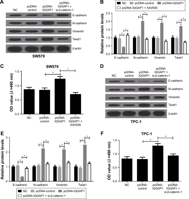 Inactivation of the Wnt/β-catenin pathway reversed the effects of IQGAP1 overexpression on thyroid cancer cells. Notes: ( A and B ) Effects of combination of pcDNA-IQGAP1 and XAV939 on E-cadherin, N-cadherin, Vimentin and Twist in SW579 cells. ( C ) MTT assay was used to detect the effects of combination of pcDNA-IQGAP1 and XAV939 on proliferation in SW579 cells. ( D and E ) Effects of co-transfection with pcDNA-IQGAP1 and XAV939 on E-cadherin, N-cadherin, Vimentin and Twist in TCP-1 cells. ( F ) MTT assay was used to measure the effects of co-transfection with pcDNA-IQGAP1 and XAV939 on proliferation in TPC-1 cells. * P