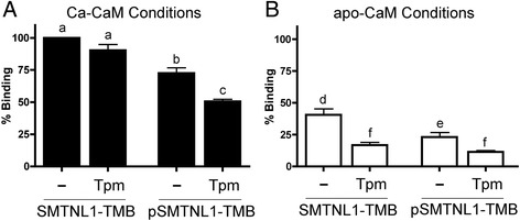 Interdependency of SMTNL1 phosphorylation, calcium and tropomyosin on calmodulin-binding. SMTNL1-TMB (200 μg, 7 nmol) was incubated with an equimolar amount of Tpm. The mixture was then incubated with CaM-Sepharose (40 μL; ligand density of ~10–14 μmol/mL) in the presence ( a ; Ca-CaM, 5 mM CaCl 2 ) or absence ( b ; apo-CaM, 1 mM EDTA) of calcium. Some experiments were completed with SMTNL1-TMB that had been previously phosphorylated with PKA. After washing, the retention of SMTNL1-TMB or phosphorylated SMTNL1-TMB was analyzed. The band densities were quantified and binding to CaM-Sepharose expressed as percentage of SMTNL1-TMB recovered under maximal binding conditions (i.e., Ca-CaM in the absence of Tpm). All experiments are n = 3–5 and were analyzed by one-way ANOVA with Tukey's post hoc analysis. Different letters indicate significant differences among groups (a,b,c: comparison among all Ca-CaM conditions; d,e,f: comparison among all apo-CaM conditions; p