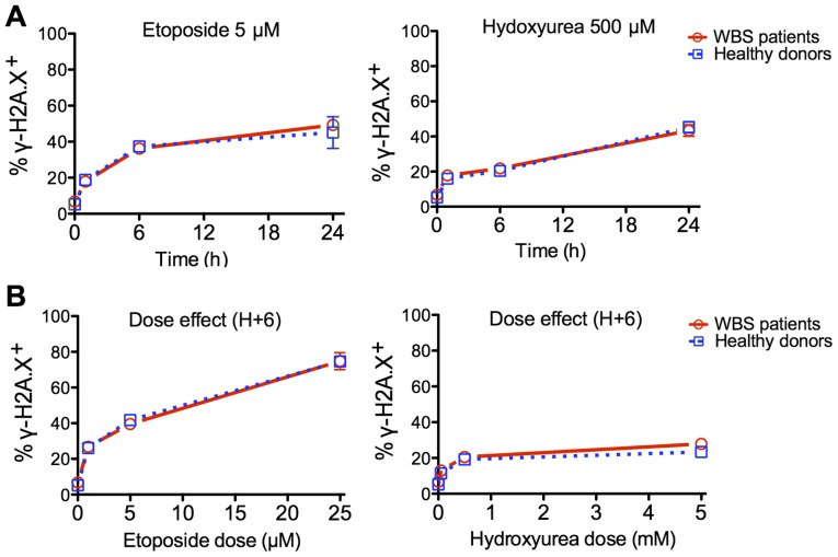(A) Kinetics of γ-H2A.X induction in primary fibroblasts from Williams-Beuren syndrome (WBS) patients and healthy donors upon exposure to etoposide or hydroxyurea. (B) Dose effect of γ-H2A.X induction after 6 h of treatment with etoposide or hydroxyurea.
