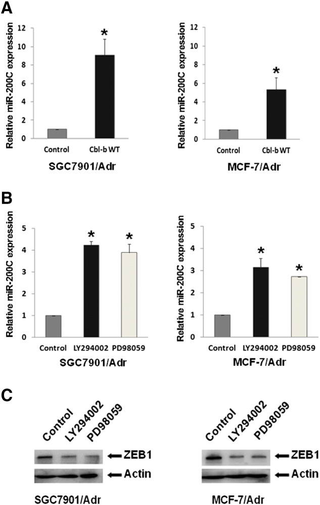 Overexpression of Cbl-b repressed the mesenchymal phenotype by the inhibition of ERK/Akt-miR-200c-ZEB1 axis. (A) SGC7901/Adr and MCF-7/Adr cells were transfected with Cbl-b WT and empty vector plasmid for 48 hours. The relative level of miR-200c was analyzed by qRT-PCR. * P