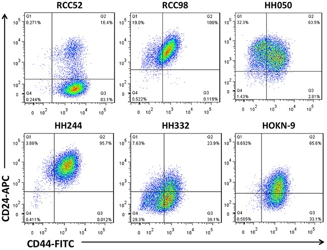 Two color cytofluorometric analysis on six different histologic RCC cell lines Six different histologic RCC cell lines, sarcomatoid RCC52, chromophobe RCC98, papillary HH050, tubular HH244, clear cell HH332 and HOKN-9, were tested with anti-CD44 and anti-CD24 mAbs conjugated with FITC and APC respectively, as test reagents.