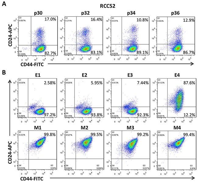 Two color cytofluorometric analysis on RCC52 cells and the clonal sublines Immunophenotypic profiles of the parental, epithelioid (E1~E4) and fibroblastoid (M1~M4) clonal sublines of the RCC52 cell line as determined by two color analysis with anti-CD44 and <t>anti-CD24</t> mAbs conjugated with FITC and <t>APC</t> respectively. A . The expression of CD44/CD24 profile of different passage of RCC52 cells. B . The expression of CD44/CD24 profile in epithelioid and fibroblastoid sublines.