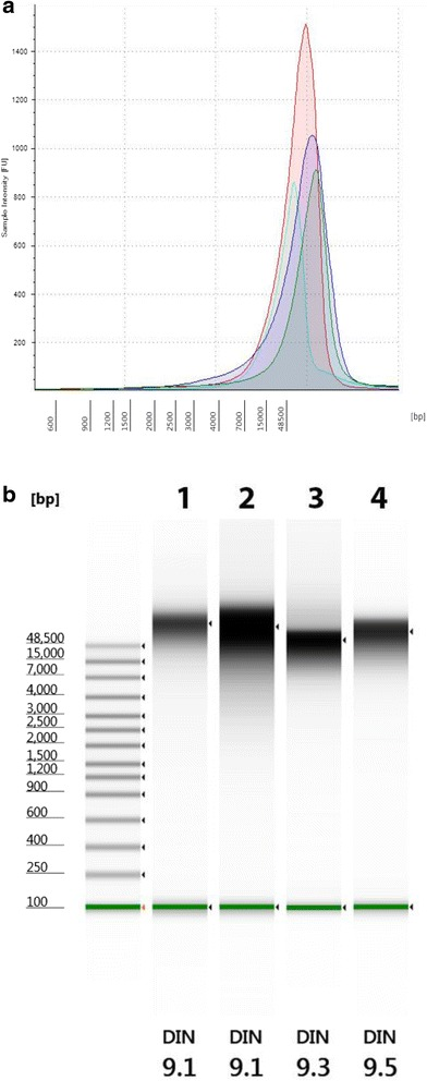 Quantitation of Genomic <t>DNA.</t> Electropherogram ( a ) and gel image ( b ) of high molecular weight gDNA from Agilent 2200 TapeStation using the Genomic DNA <t>ScreenTape</t> System. Campylobacter ( green ), Listeria ( blue ), Vibrio ( aqua ), and Salmonella ( red ). Green lines at the bottom of the gel image are internal standards added to permit quantitation. Lower marker is not shown in the electropherogram