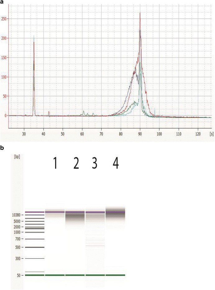 Appearance of DNA libraries from Agilent 2100 Bioanalyzer analysis. Representative electropherogram ( a ) and virtual gel ( b ) used for visual inspection (generated with the Agilent 2100 Bioanalyzer system with the DNA 12000 Kit) of DNA libraries sizes prepared for sequencing with the PacBio SMRTbell 10 kb Template Preparation Kit on the Agilent NGS Workstation. A typical electropherogram using the Agilent bioanalyzer 2100 DNA 12000 kit shows the lower marker at 35 s and the upper marker at 90 s. The DNA libraries and the upper marker co-elutes with each other, the sharper peak is the upper marker, shown in red on the gel image. The average library sizes are: Campylobacter ( green , 9.1 kb), Listeria ( blue , 9.5 kb), Vibrio ( aqua , 10 kb), and Salmonella ( red , 15 kb)