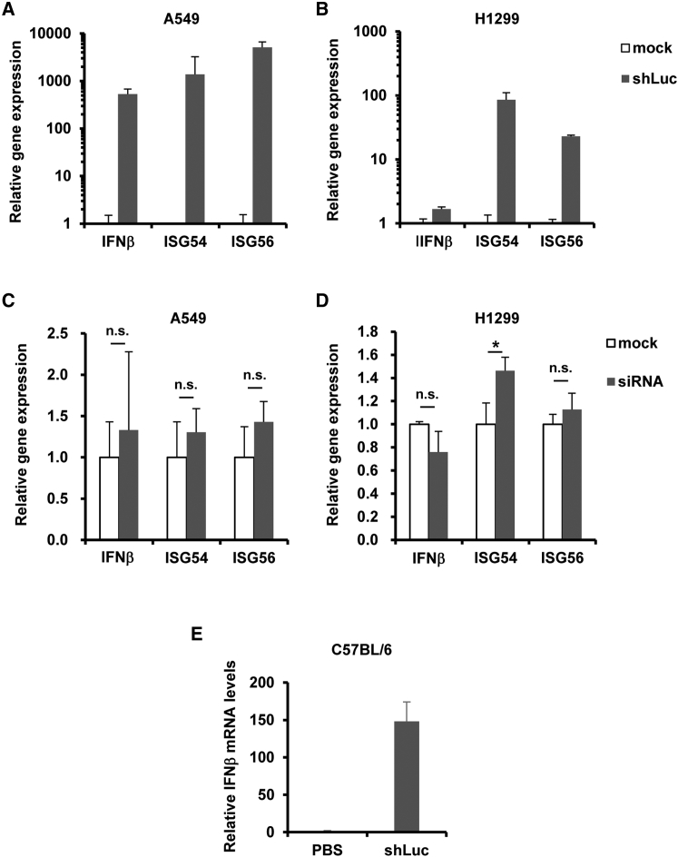Type I IFN Responses Following Introduction of shRNA-Expressing Vectors (A–D) A549 (A and C) and H1299 (B and D) cells were transfected with pHMU6-shLuc (A and B) or siControl (indicated as siRNA) (C and D). After 24-hr incubation, IFNβ, ISG54, and ISG56 mRNA levels in the cells were determined by qRT-PCR. The data are expressed as the means ± SD (n = 3). (E) 100 μg pHMU6-shLuc was intramuscularly administered to C57BL/6 mice. 3 hr after administration, the IFN-β mRNA levels in the mouse muscle were determined by qRT-PCR. Data are expressed as the means ± SE (n = 3–4). *p