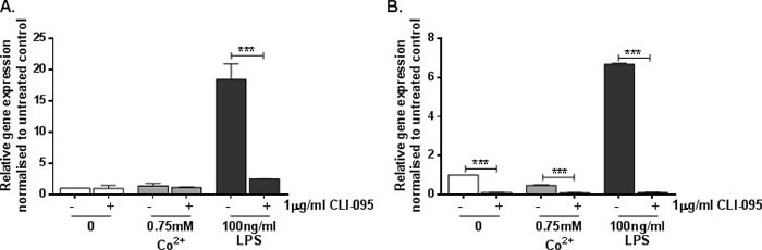Effect of Co 2+ and TLR4 activation on ICAM1 expression A. HMEC-1 and B. MonoMac 6 cells were stimulated with 1μg/ml CLI-095 for 6h prior to 24h stimulation with 0.75mM Co 2+ or 100ng/ml LPS. RNA was isolated and cDNA synthesised by reverse transcription. ICAM1 expression was quantified by qRT-PCR. Data is representative of three independent experiments.