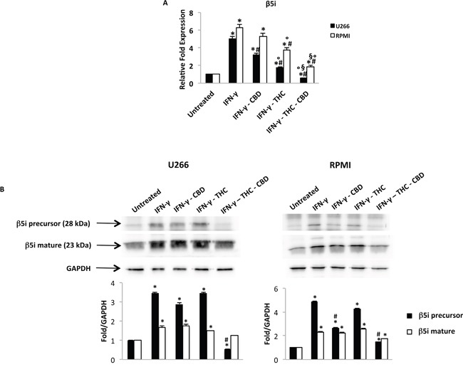 Regulation of the β5i subunit by THC and CBD in MM cell lines stimulated with IFN-γ U266 and RPMI cells were treated with IFN-γ 100 U/ml for 24 h. Then cells were treated with THC (12.5 μM), CBD (12.5 μM) alone and in combination for additional 24 h. A. The β5i mRNA levels were determined by qRT-PCR. GAPDH was used for normalization. Data are expressed as relative fold with respect to vehicle treated cells used as the control. Data are expressed as mean ± SD. *p