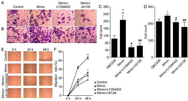 miR-21 regulates the invasion and migration of CCA cells through activation of Akt and ERK1/2 pathways. (A) The invasive and (C) migration properties of indicated cells were tested in invasion and migration assays in Transwell inserts. (B and D) Penetrated cells were counted and analyzed. (E) Scratch-wound assay was performed in QBC939 cells and (F) migration rate were quantified from results shown in (E). Experiments were performed in triplicate ( * P