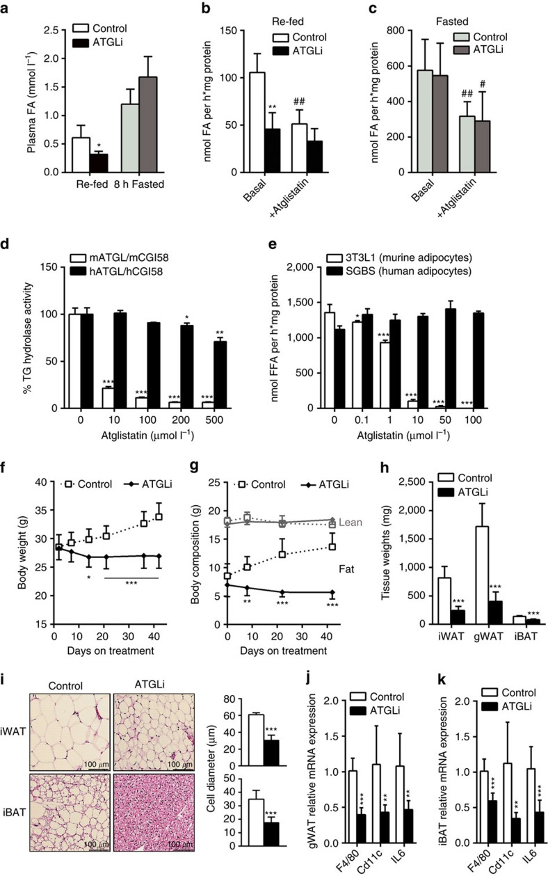 Atglistatin transiently inhibits lipolysis and protects from HFD-induced obesity. Six weeks old male C57Bl6J mice were fed a HFD (45 kJ% fat; 22.1 kJ g −1 ) for 50 days. Thereafter, mice were fasted for 7 h and then re-fed a HFD with or without Atglistatin (2 mmol kg −1 diet) for 2 h followed by a second, subsequent fasting period of 8 h. ( a ) Plasma FA levels were determined in the 2 h re-fed and 8 h fasted state ( n =5). ( b ) FA release from gonadal adipose tissue explants of re-fed and ( c ) 8 h-fasted mice ( n =5 per group). ( d , e ) Atglistatin does not inhibit human adipocyte lipolysis. ( d ) TG hydrolase activity was assessed in COS-7 lysates of cells overexpressing human and murine ATGL and CGI-58, respectively, in the presence and absence of the indicated concentrations of Atglistatin. ( e ) SGBS and 3T3-L1 preadipocytes were differentiated to adipocytes. Then, cells were preincubated with the indicated concentrations of Atglistatin for 2 h. Thereafter, the medium was replaced by DMEM containing 2% BSA, 10 μM Forskolin and the indicated concentrations of Atglistatin for 1 h. The release of FA in the medium was determined and calculated per mg cell protein. ( f – k ) Mice were fed a HFD for 50 days, followed by HFD-feeding in the presence or absence of Atglistatin for another 50 days. ( f ) Body weight, and ( g ) fat and lean mass development ( n =7 per group). Adipose tissue depots, inguinal (i)WAT, gonadal (g)WAT, and interscapular (i)BAT were analysed for their ( h ) weight and ( i ) adipocyte size. ( j , k ) mRNA expression of IL-6 and macrophage markers F4/80 and Cd11c was assessed in gWAT and iBAT of re-fed mice ( n =5 per group). Data represent mean±s.d. Statistical significance was determined by Student's two-tailed t -test. For analysis of multiple measurements, we performed one-way analysis of variance (ANOVA) followed by Bonferroni post-hoc test; * P