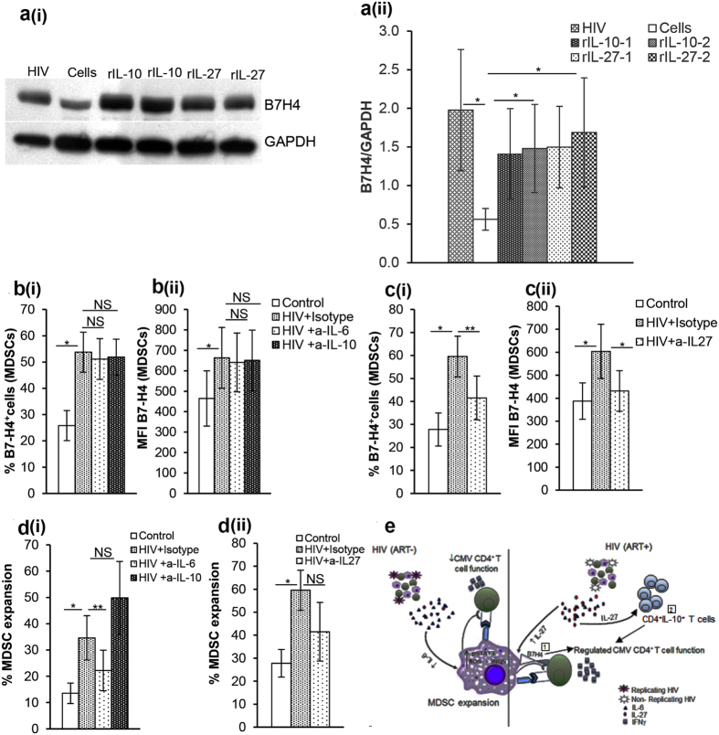 IL-27 regulates B7-H4 expression on HIV expanded MDSC. (a) To determine if IL-27 regulates B7-H4 expression, PBMCs from HIV(−) donors were cultured with or without rIL-27 (5 ng/ml) for 72 hrs. Cells cultured in the presence of non-infectious HIV BaL (p24, 12 ng/10 7 cells) or rIL-10 (5 ng/ml) served as additional controls. Whole cell lysates of PBMCs were prepared and immunoblotted with Abs to GAPDH as loading control and B7-H4. (ai) Immunoblot shown is representative of 4 donors; cells cultured with rIL10 and rIL-27 were run in duplicates. (aii) The histogram bar graph shows mean+/−SD of the densitometric analysis for B7-H4 (n = 4). (b–d) Effect of IL-6, IL-10 and IL-27 on MDSC and B7-H4 + HIV MDSC was determined. PBMCs of healthy donors were cultured with or without non-infectious HIV BaL (p24, 12 ng/10 7 cells) in the presence or absence of neutralizing anti-IL6, -IL-10 or –IL-27 or respective isotype antibodies for 5 days. Cells were stained with anti-CD11b, -CD33, -CD14, -HLA DR and –B7-H4 Abs and analyzed using flow cytometry. (b) %B7-H4 + MDSC (bi) and MFI of B7-H4 on MDSC (bii) is shown in presence of anti-IL-6 or-IL-10 antibodies. (c) %B7-H4 + MDSC (ci) and MFI of B7-H4 on MDSC (cii) is shown in presence of anti-IL-27 antibody. (d) %MDSC is shown in presence of anti-IL-6 and –IL-10 (di) and anti-IL-27 (dii) antibodies. Histograms are presented as mean+/−SD; n = 4 donors. (e) Regulation of immunity in HIV/CMV co-infection: HIV/CMV co-infected individuals on ART with suppressed HIV replication and recovered CD4 + T cell numbers have increased IL-27 and reduced MDSC, IL-27 induces (1) B7-H4 on MDSC which binds to CMV-CD4 + T cells and (2) mediates CD4 + IL-10 + T cells, these collectively regulates T cell activation such that IFNγ is produced that is sufficient to control CMV replication without inducing inflammation (right side of straight line) . HIV/CMV co-infected ART naïve individuals with replicating virus have increased IL-6 that induces MDSC expansion and MDSC contributes to immune suppression (left side of straight line) observed during chronic disease stage. *p