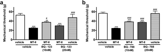 Involvement of endothelin on MT-II-induced articular hyperalgesia. MT-II (10 μg/joint) or PBS (vehicle) was injected in tibio-tarsal articulation (25 μL). Pain threshold was determined using a modified electronic pressure-meter test 8 h after MT-II injection, and represented as force (in g ). a BQ-123 or ( b ) BQ-788 (10 and 20 nmol/joint, selective antagonists of ET-A and ET-B endothelin receptors, respectively) were injected 30 min before MT-II. Each point represents the mean ± SEM of six animals. ** p
