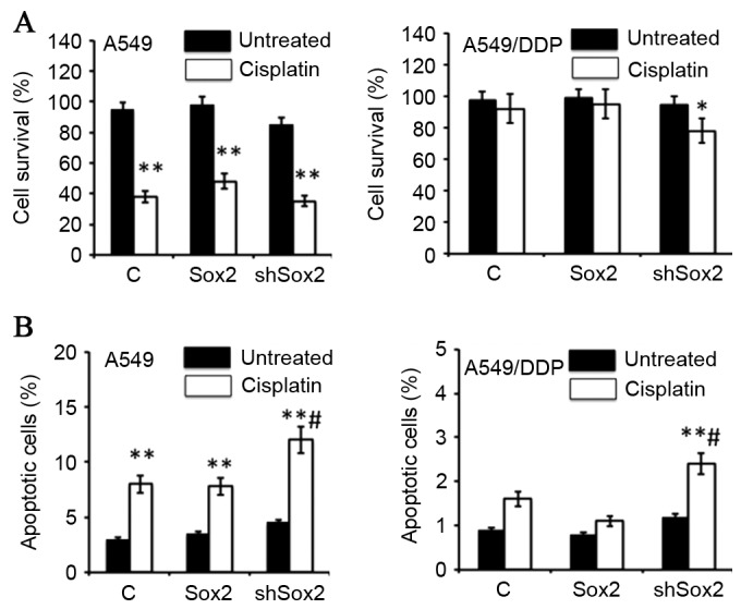 Sox2 inhibits <t>cisplatin-induced</t> apoptosis in lung cancer cells. A549 and A549/DDP cells were transfected with a plasmid expressing Sox2 or shSox2, or a pcDNA3.1 plasmid for 12 h, and then cultured in medium containing 10 µM cisplatin for an additional 24 h prior to being harvested for analysis. (A) MTT assay determined the proliferation of cells in the presence of cisplatin. The transient transduction of Sox2 or shSox2 had no effect on cell proliferation. Overexpression of Sox2 increased the survival rate of A549 cells in the presence of cisplatin, but had no effect on cisplatin-resistant A59/DDP cells. Notably, inhibition of Sox2 expression by short hairpin RNA increased the cisplatin-induced cell death in A549/DDP cells. (B) Cell apoptosis analyzed by a cytometric assay. An inhibition of Sox2 by shSox2 significantly enhanced cisplatin-induced apoptosis in A549 and A549/DDP cells (P