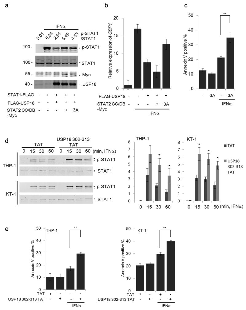 Inhibiting negative feedback regulation of USP18 by targeting its interaction with STAT2 (a) 293T cells were co-transfected with plasmids encoding STAT1-FLAG, FLAG-USP18 and either STAT2 CC/DB-Myc or the mutant STAT2 CC/DB L227A R409A K415A-Myc (3A). Following treatment with IFNα (1000 U/ml) for 15 minutes as indicated cell lysates were collected and immunoblotted with indicated antibodies. The ratio of p-STAT1/total STAT1 was quantified by LI-COR Odyssey system. (b) Cells indicated in Fig. 7a were treated with IFNα (1000 U/ml) for 12 hours and then expression of GBP1 was analyzed by RT q-PCR. Data represents mean ± S.D. for two independent experiments. (c) THP-1 cells transduced with either MIP control (−) or MIP-STAT2 CC/DB 3A (3A) were treated with IFNα (1000 U/ml) for 48 hours and then Annexin V positive cells were analyzed by flow cytometry. Data represents mean ± S.E.M. for three independently generated stable cell lines. ** P