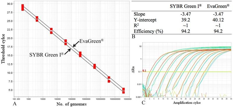 Performance of SYBR Green I and EvaGreen detection chemistries during qPCR assays. (A) Standard curves generated from amplification of serially diluted L . lactis phage P220 genome detected with the corresponding chemistries; (B) the corresponding performance parameters; and (C) amplification plots detected with SYBR Green I (brown) and EvaGreen (green).